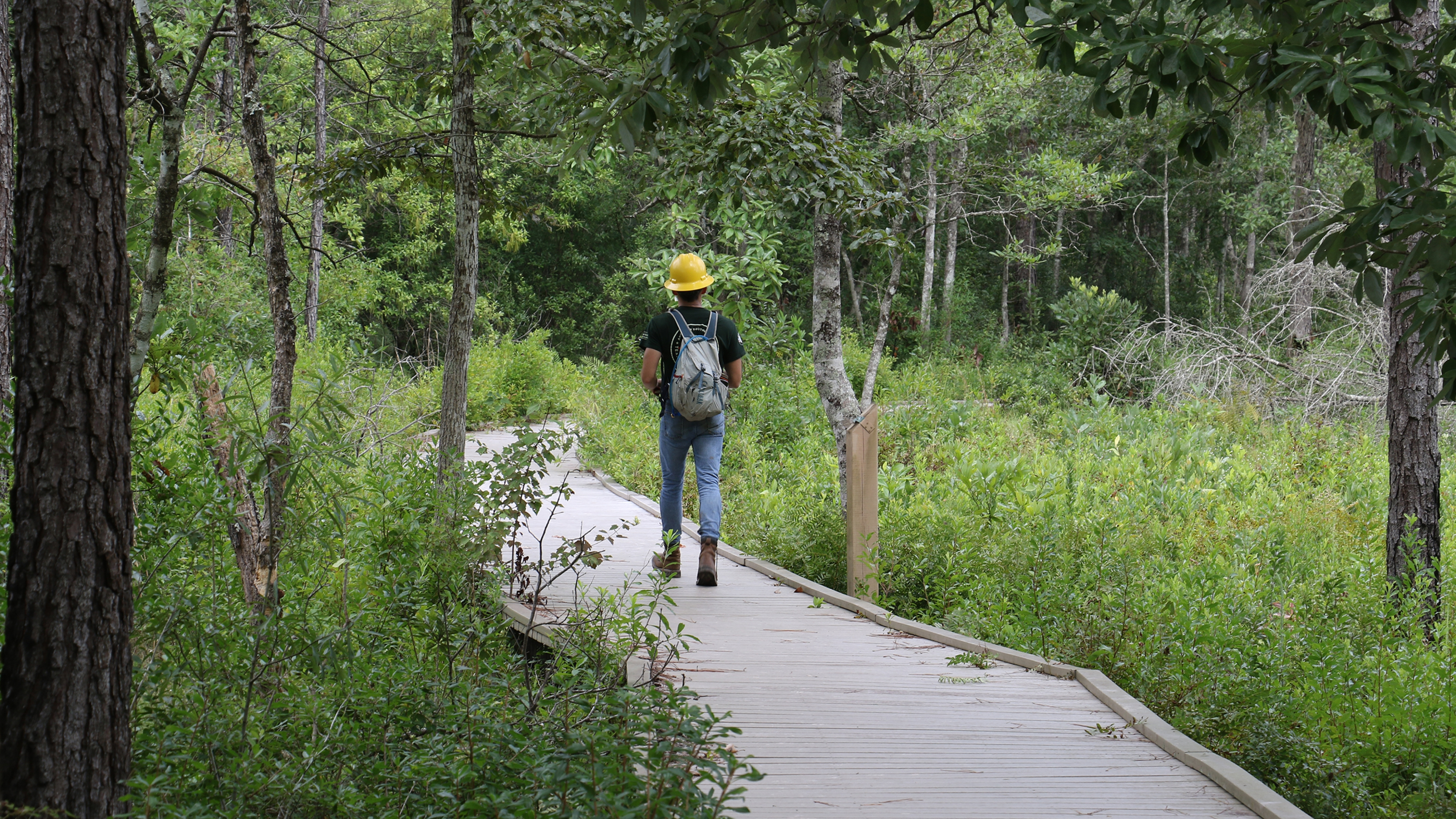 Service corps member walks on an elevated wooden path through a heavily forested area, with a yellow hard hat on
