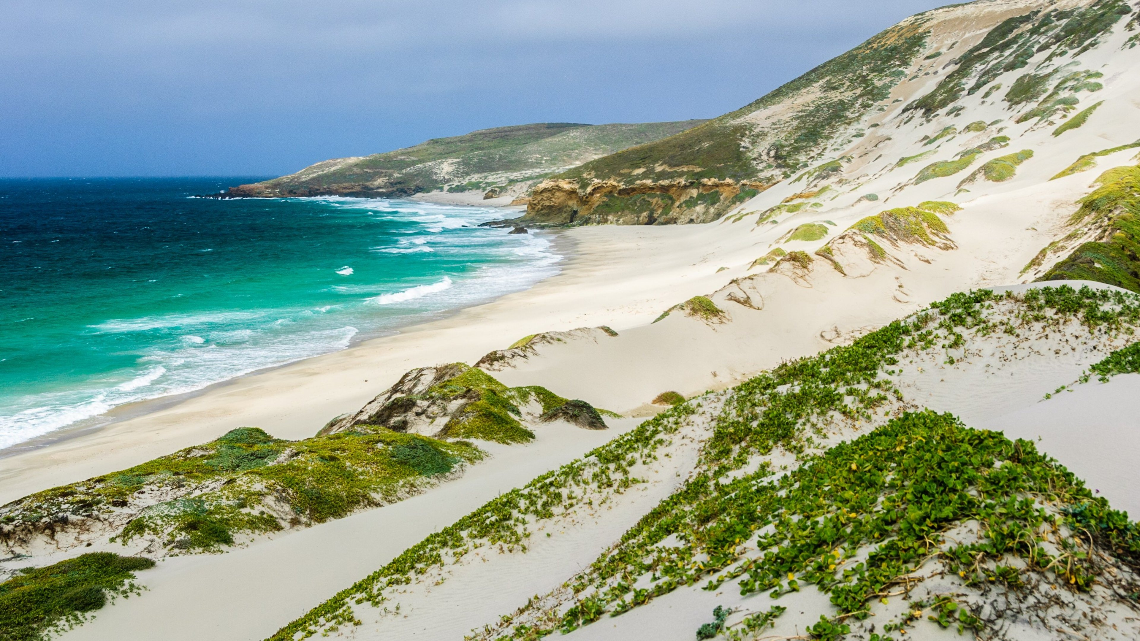 Sand dunes sprinkled with vibrant greenery line the shores of San Miguel Island at Channel Islands National Park as bright blue water rushes inland.