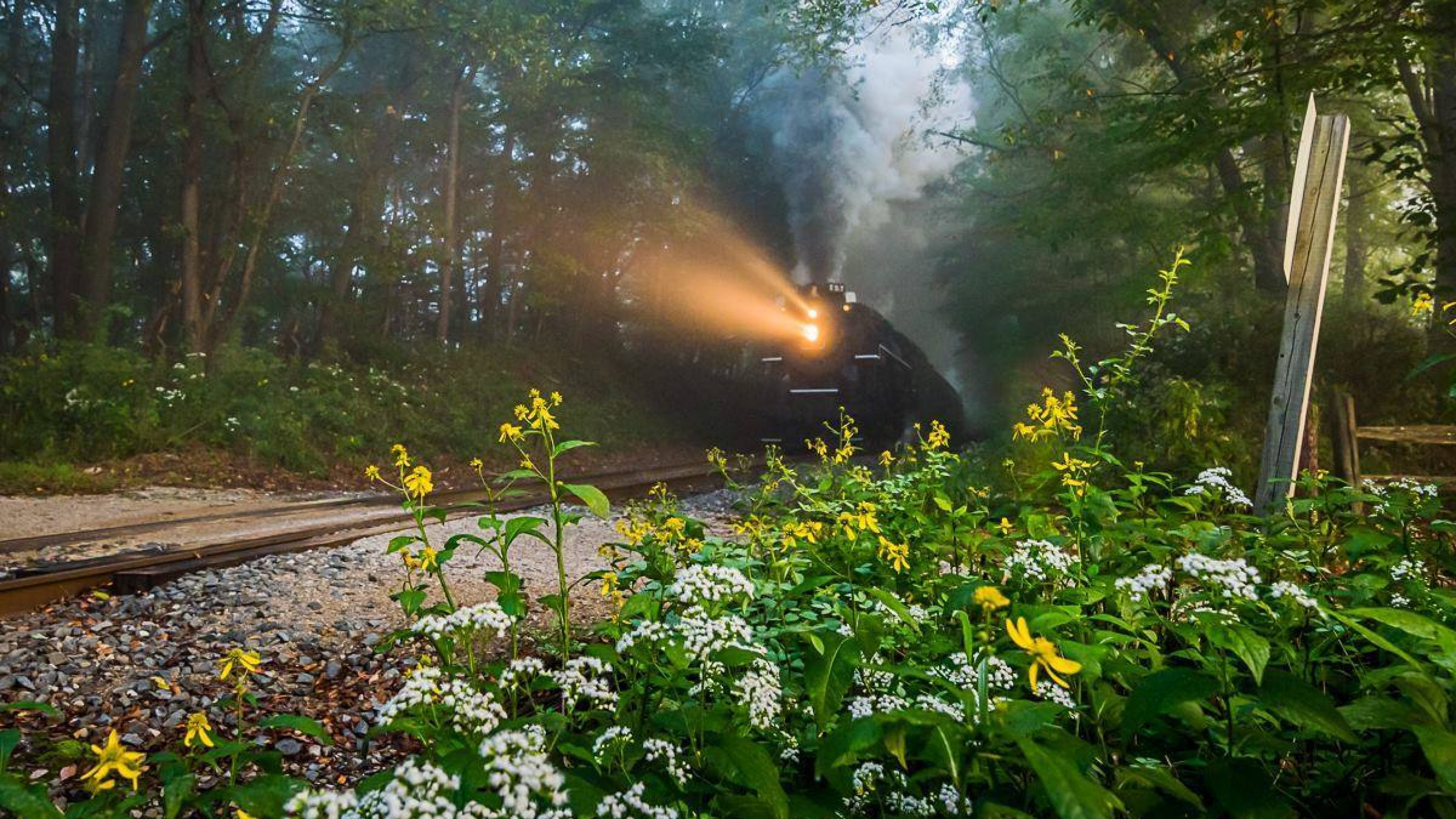Steam engine running through a foggy forest a Cuyahoga Valley National Park