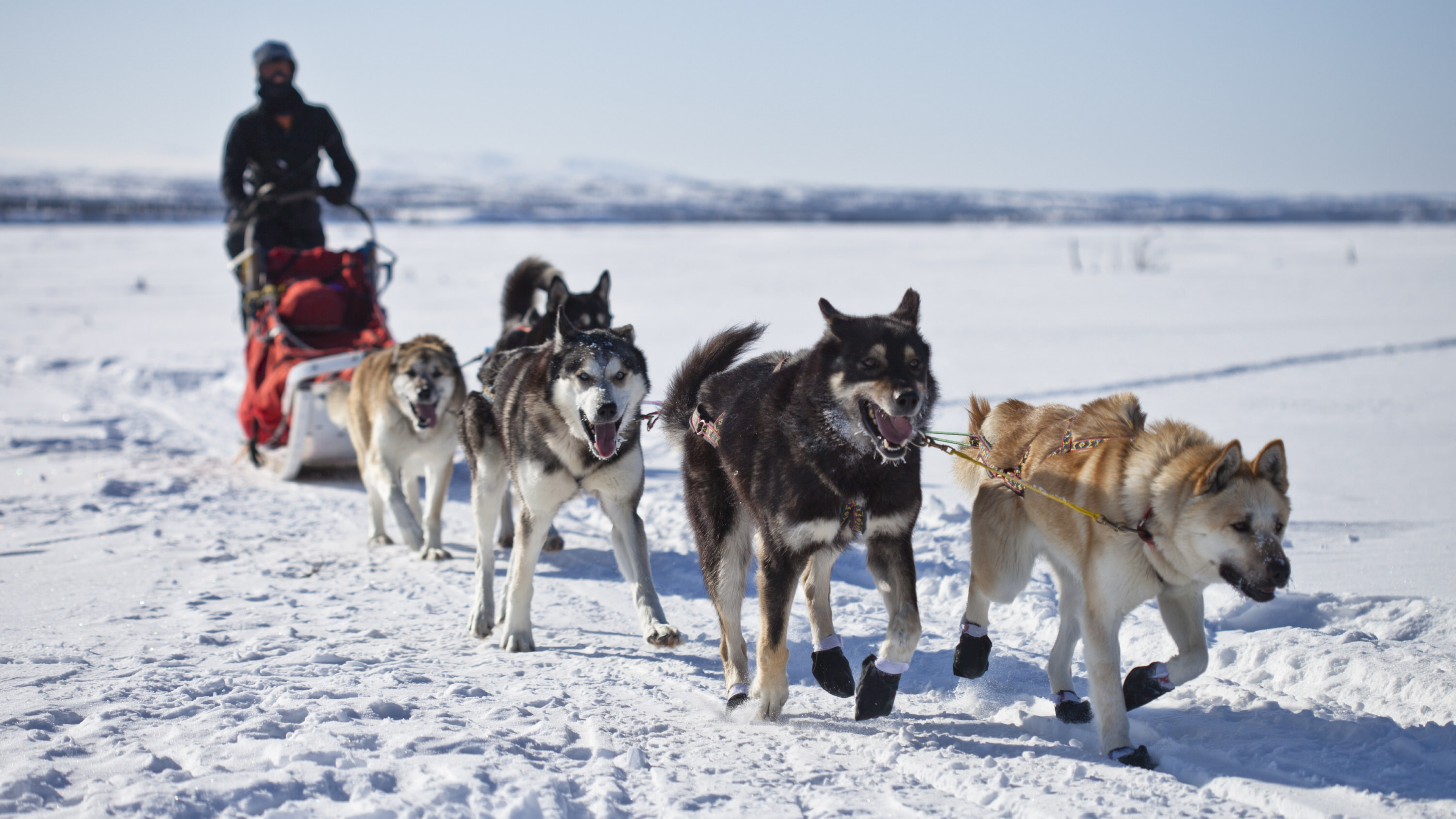5 sled dogs pulling a park ranger on a sled in the snow at Denali National Park & Preserve
