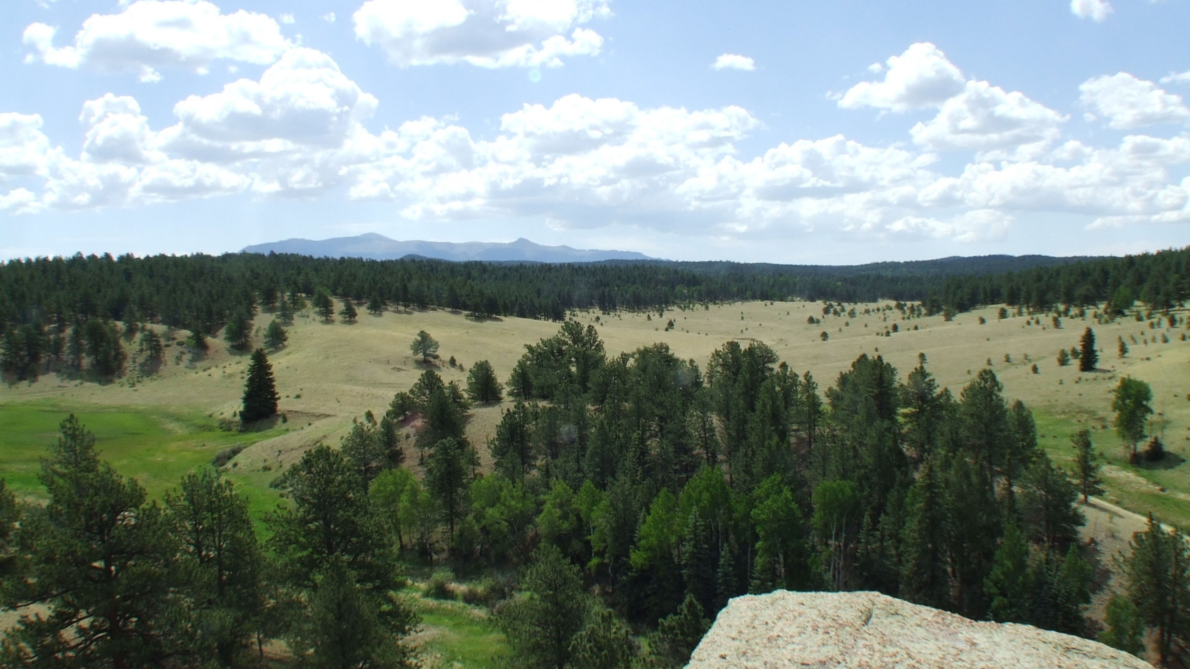 View from Twin Rock down onto the green meadows and evergreen trees under a blue sky at Florrisant Fossil Beds National Monument