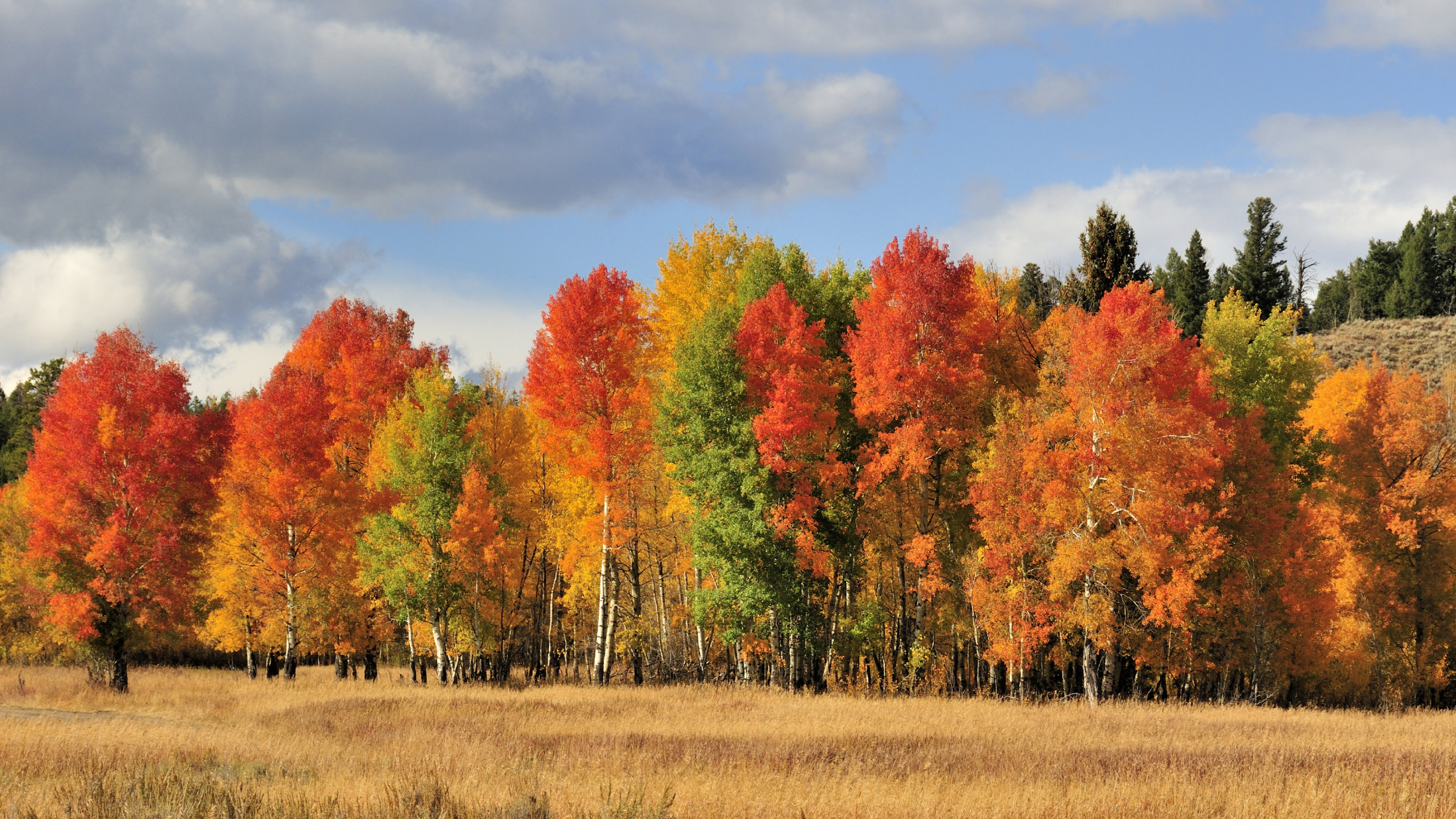 red, yellow, and green trees of grand teton national park