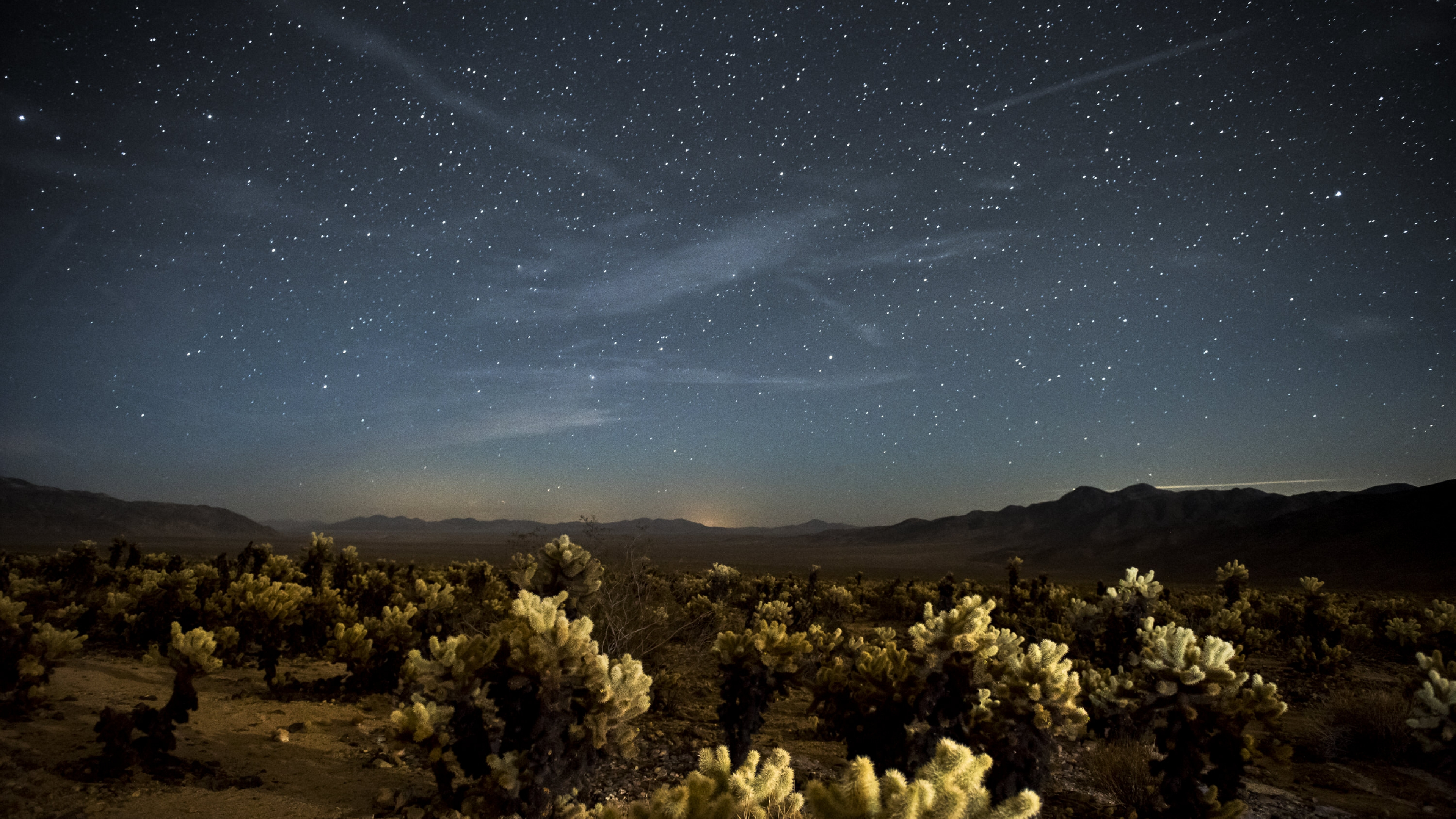 The night sky over the Cholla Cactus Garden at Joshua Tree National Park