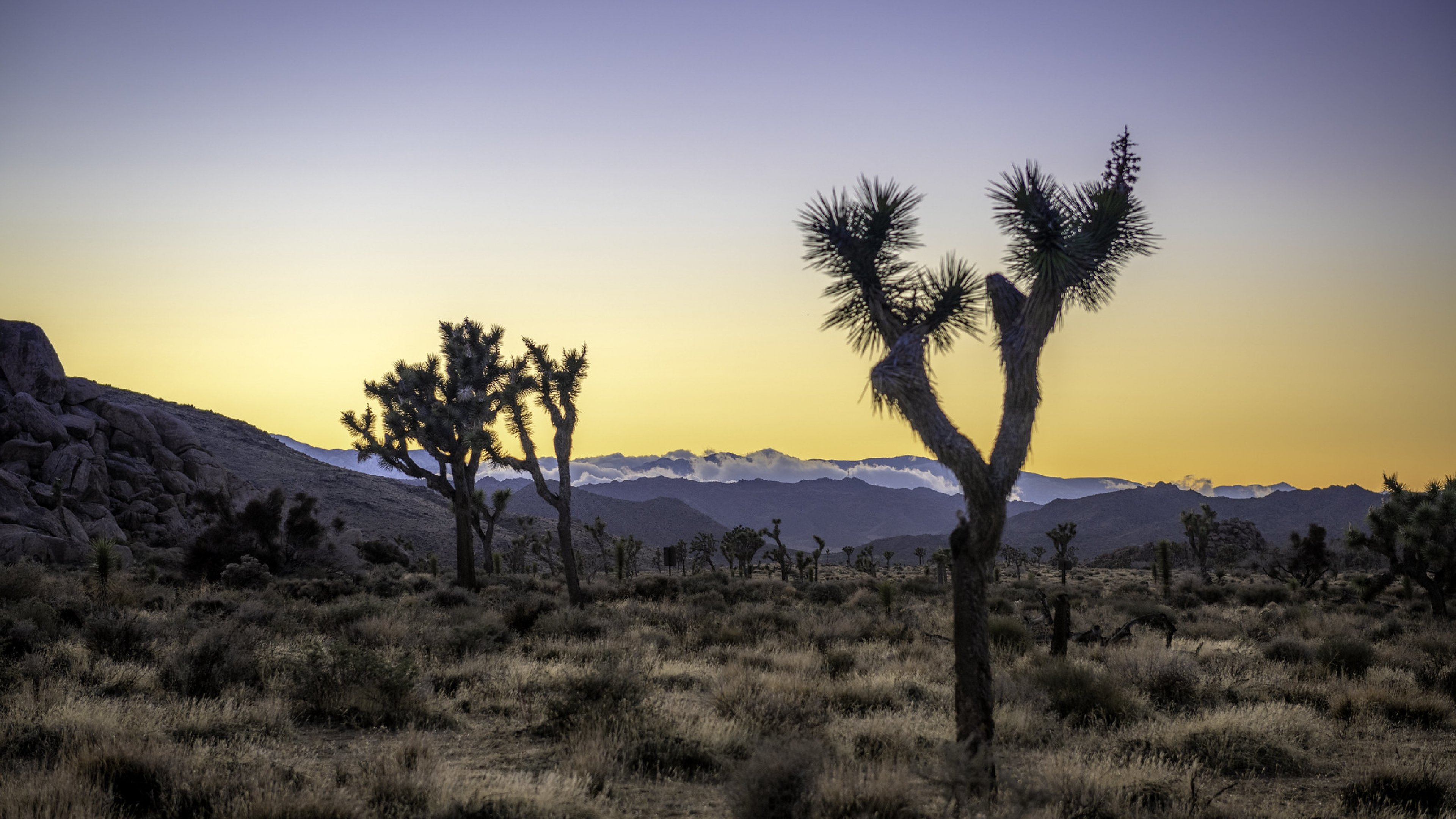 Clouds top distant mountains over a field of Joshua trees at sunset