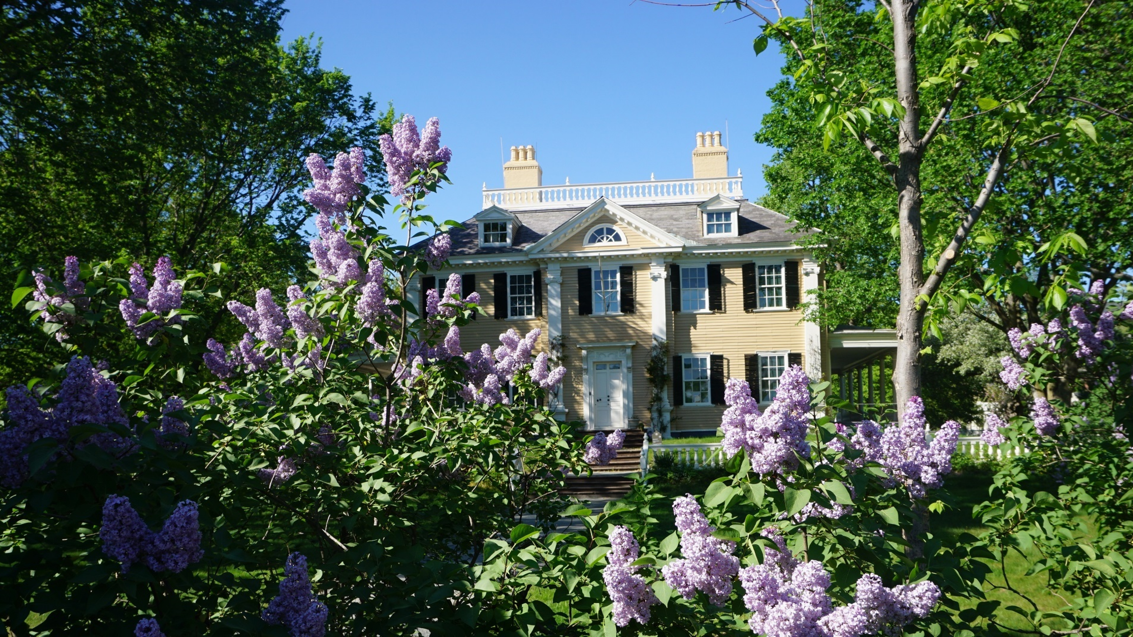 Longfellow House in spring with lilacs blooming