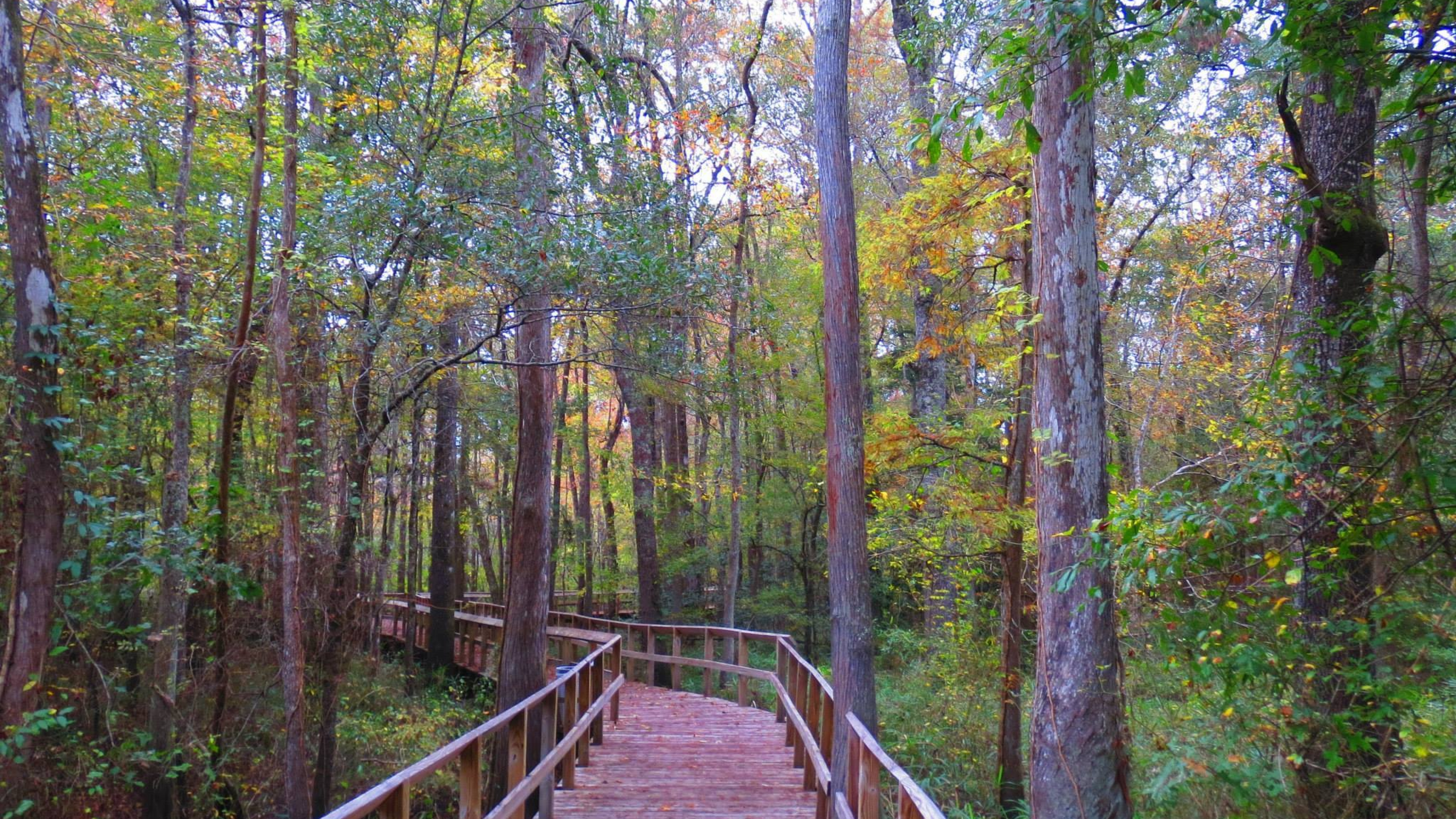 Elevated wooden trail through the forest in Moores Creek National Battlefield