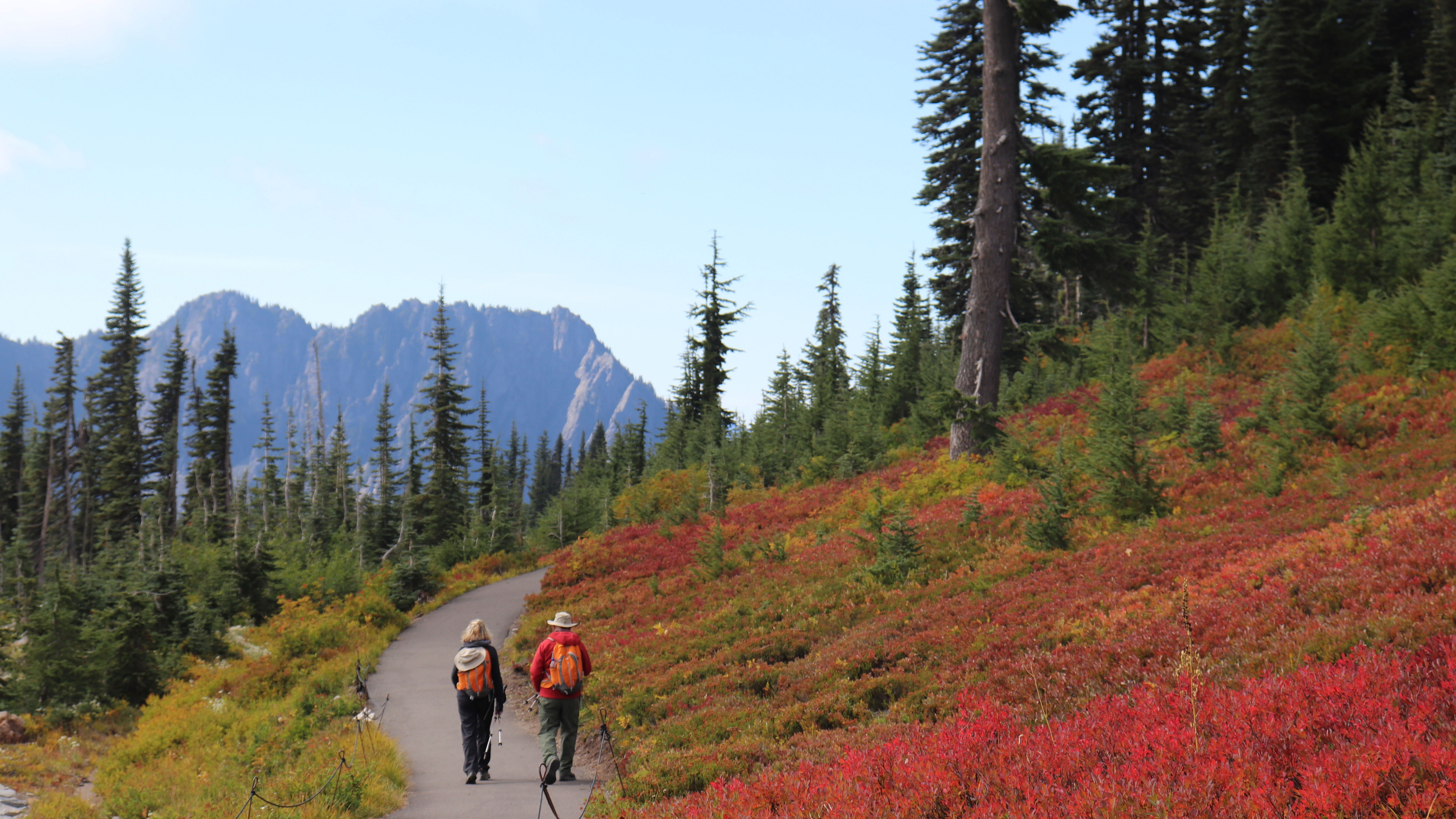 Hikers make their way along a paved path. To their right, a sloping field of red flowers. Far ahead in the distance, a mountain range.