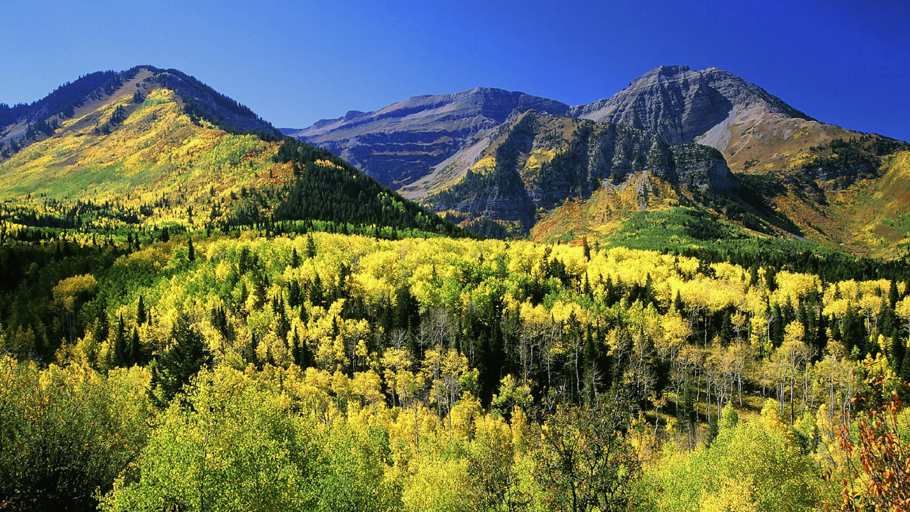 Bright yellow and green trees in front of Mount Timpanogos