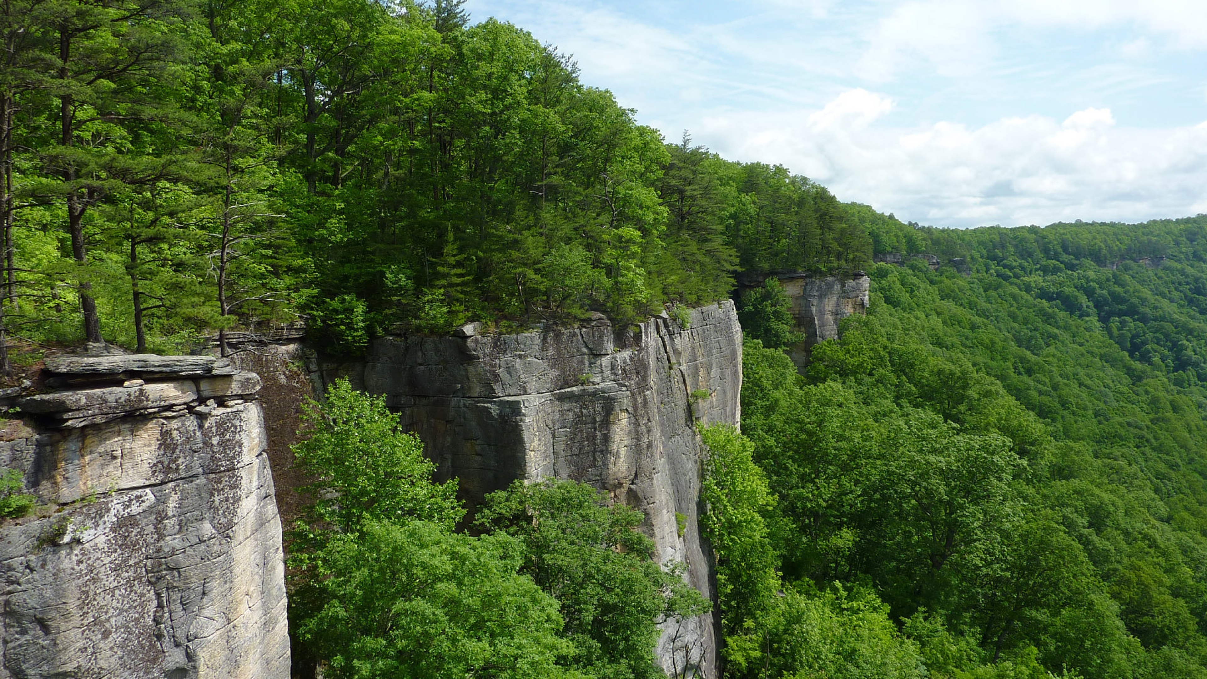 The grey stone cliffs amongst a forest of green trees at the New River Gorge National Recreation Area