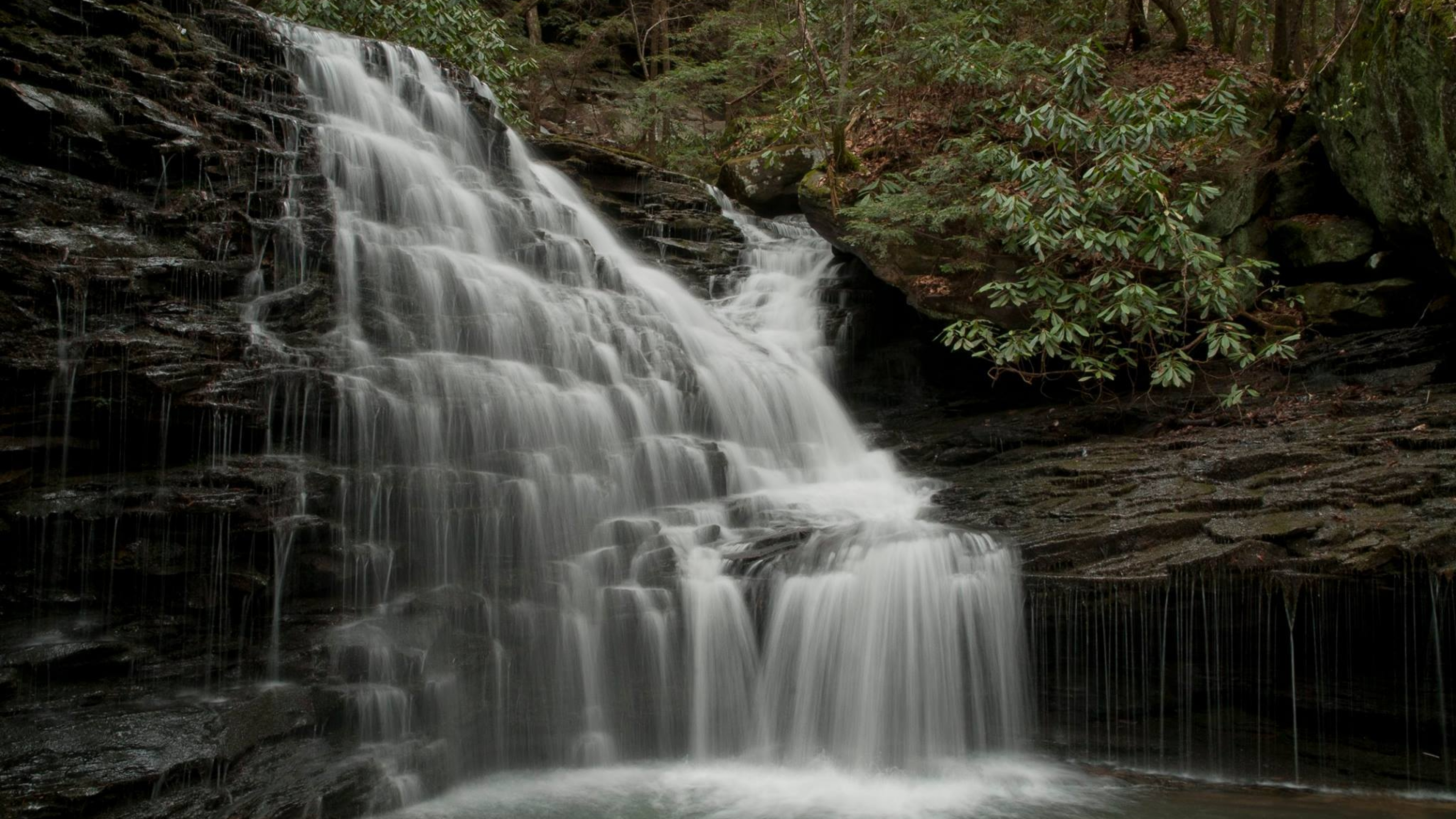 Small waterfall cascades down slate rocks into a pool surrounded by lush greenery