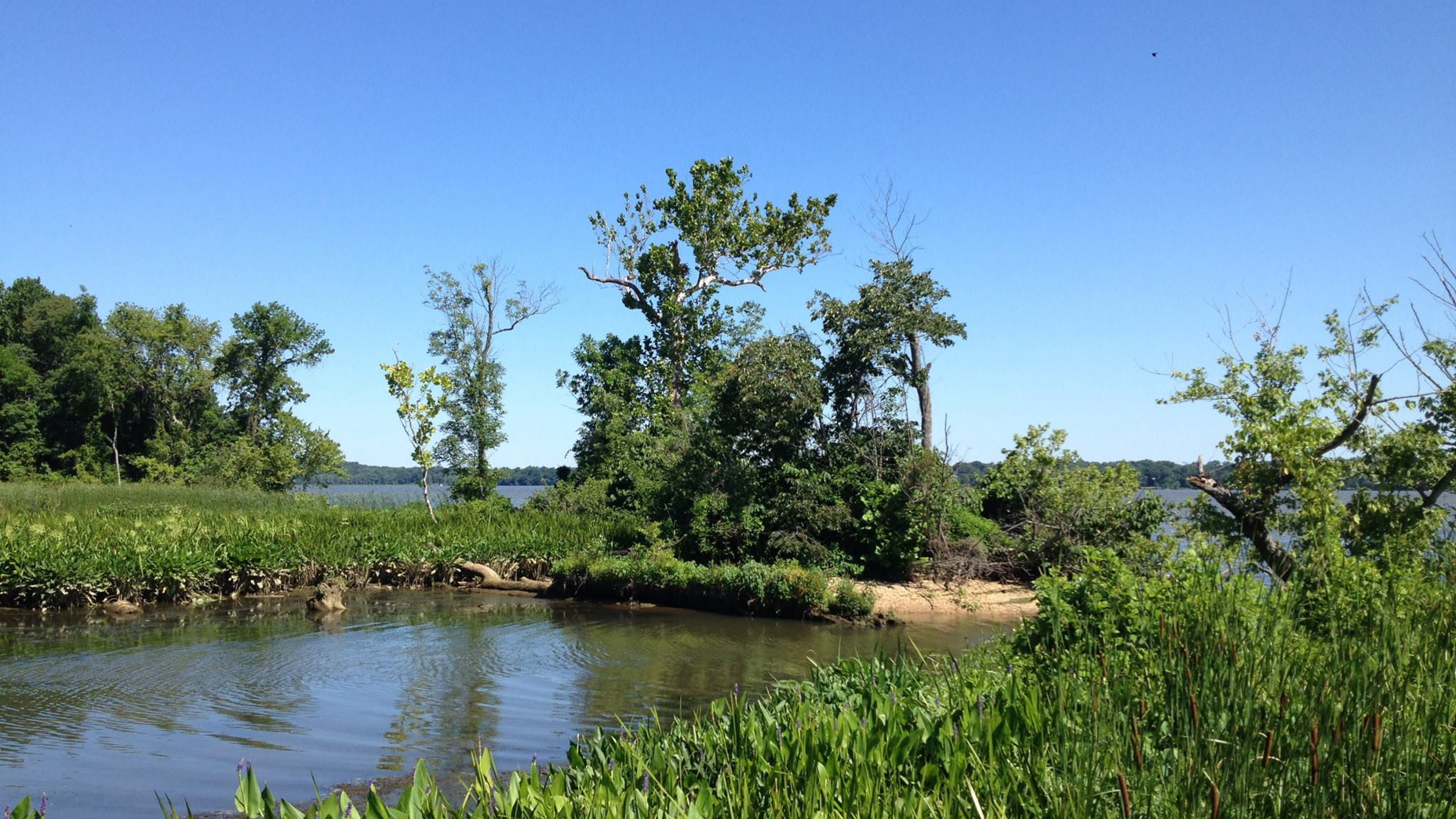 Greenery on the banks of the Accokeek Creek at Piscataway Park