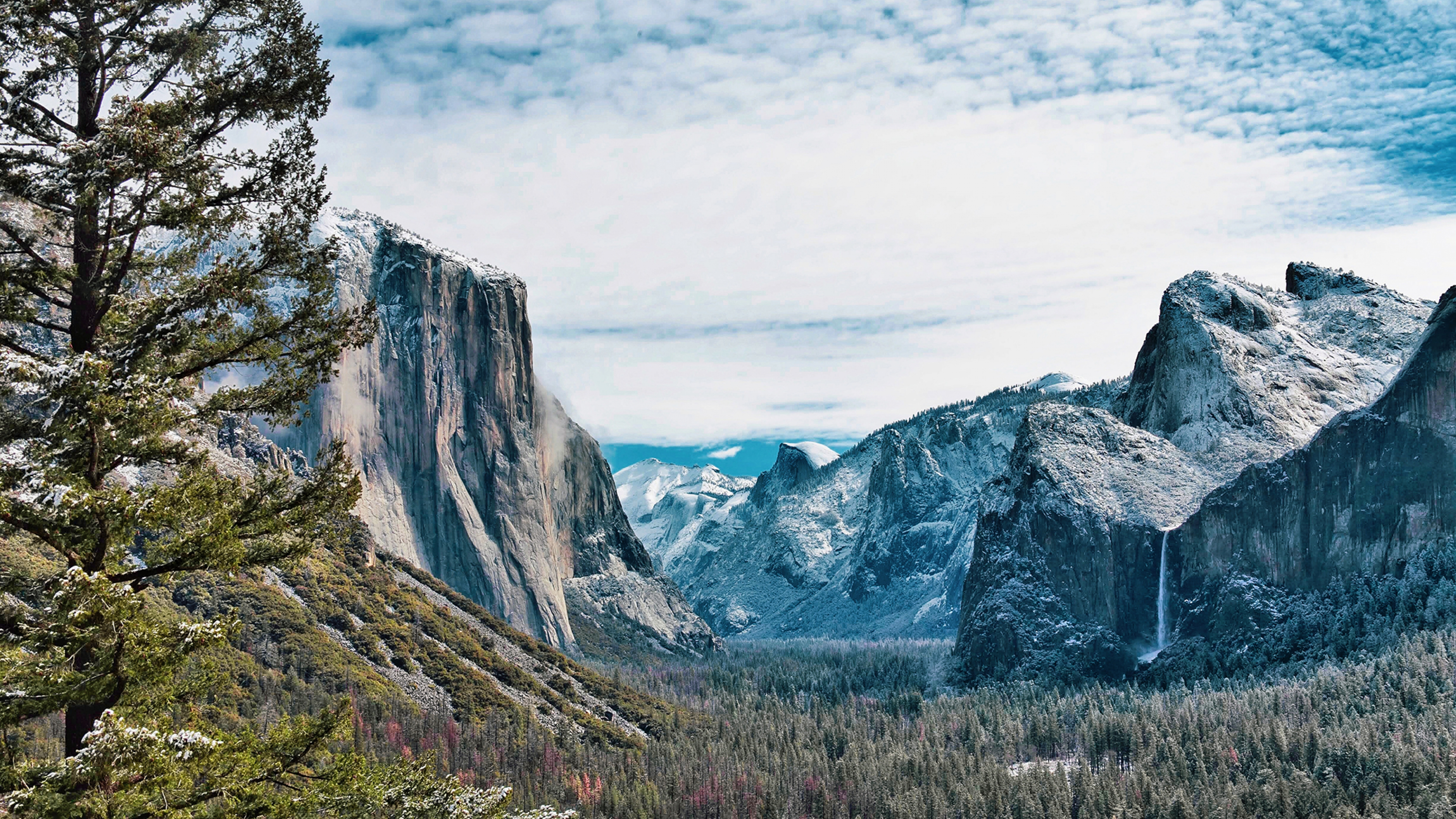 A green tree in the left foreground contrasts against the blue and grey mountains of Yosemite in the background