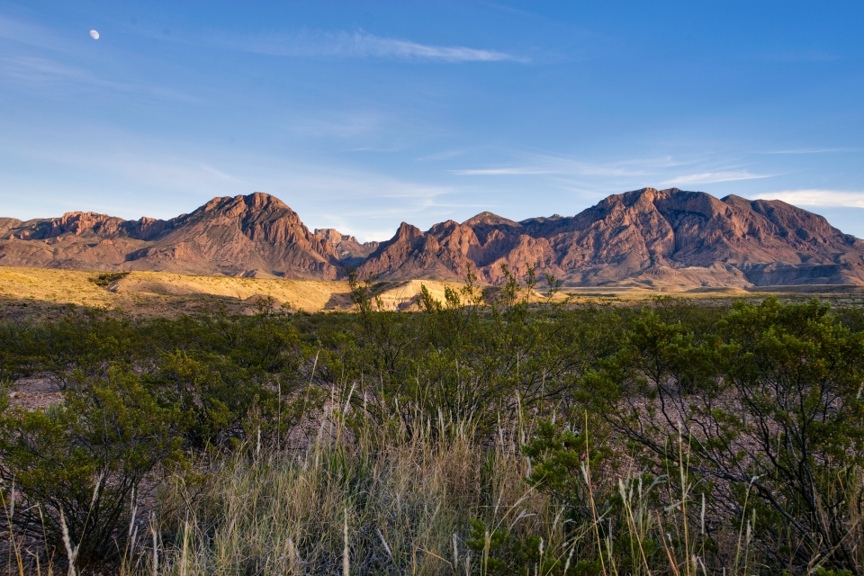 Grassy foreground with sun-lit mountains in the background at Big Bend National Park