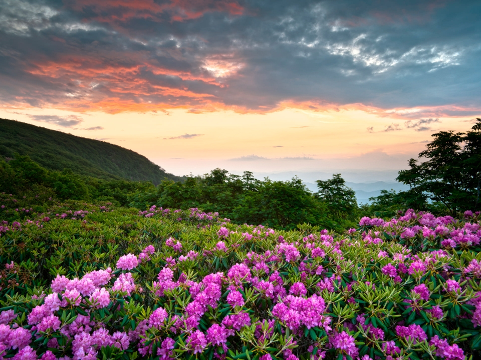 A vibrant sunset sets the background for purple flowers