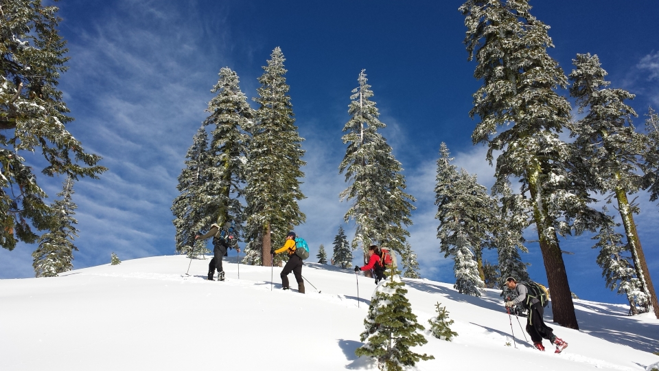 A group of people cross-country skiing through snow-covered trees