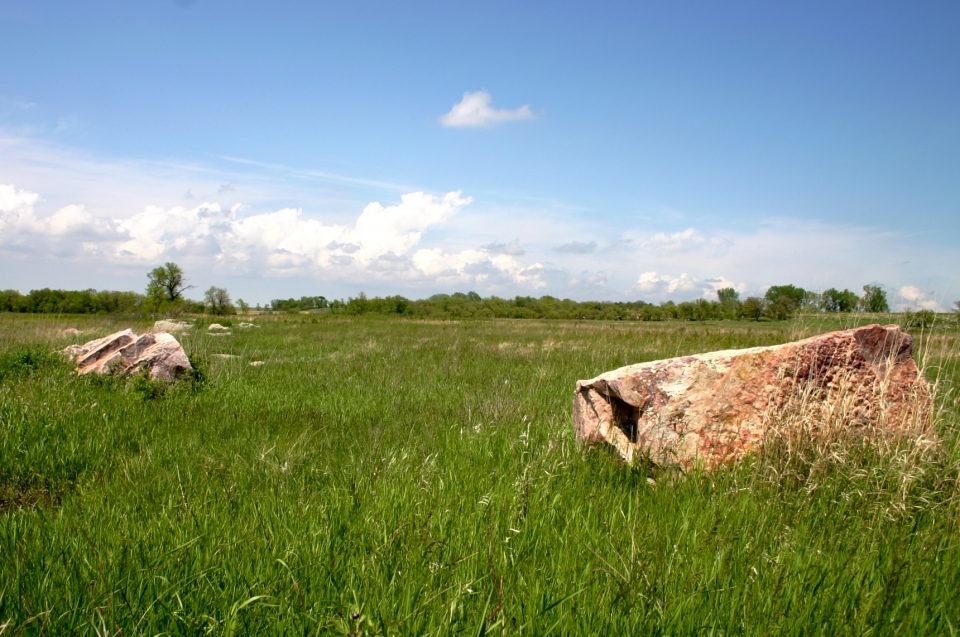 Open meadow with tall green grass, rocks, and above a blue sky with fluffy clouds