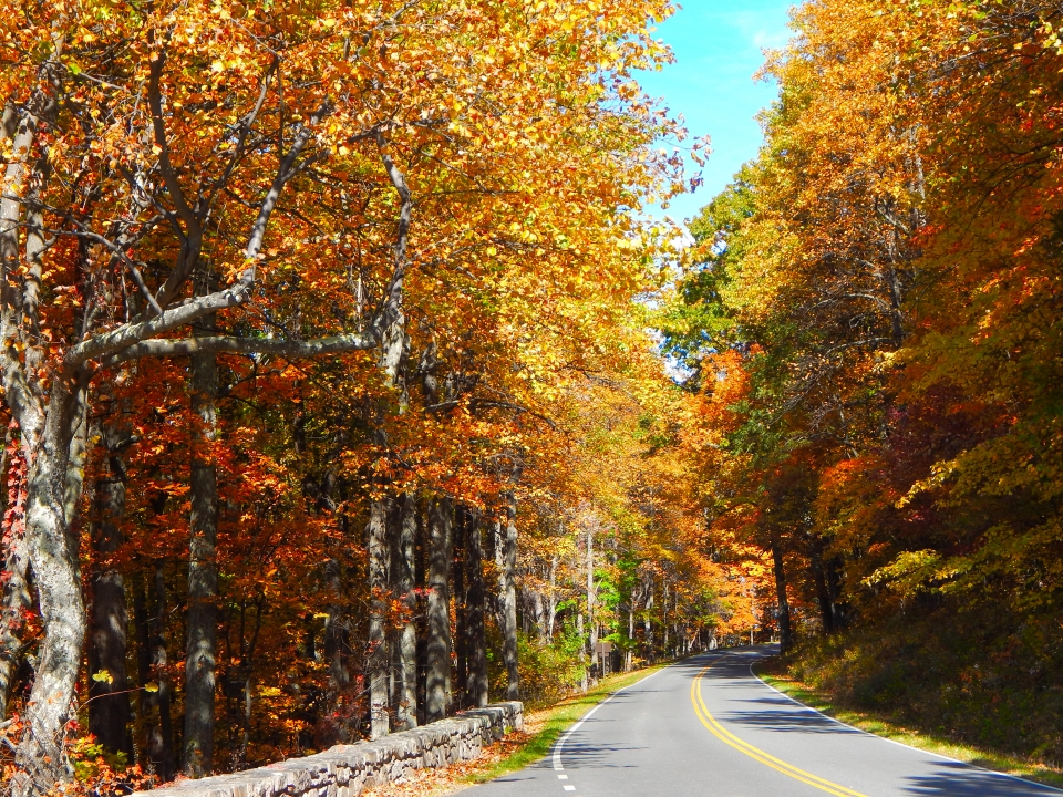 Autumn trees along Skyline Drive in Shenandoah National Park seen while on a national park road trip