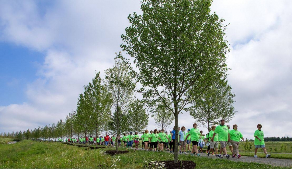 Group wearing neon green shirts walking down a path of a row of planted trees.