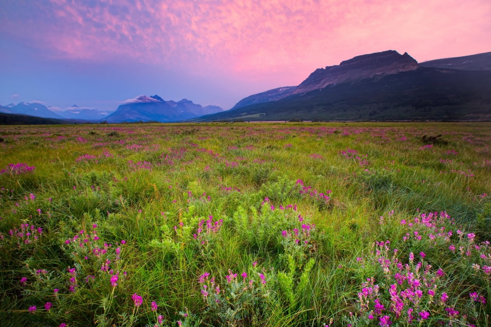 Glacier park pink sky and pink wildflowers in the meadow