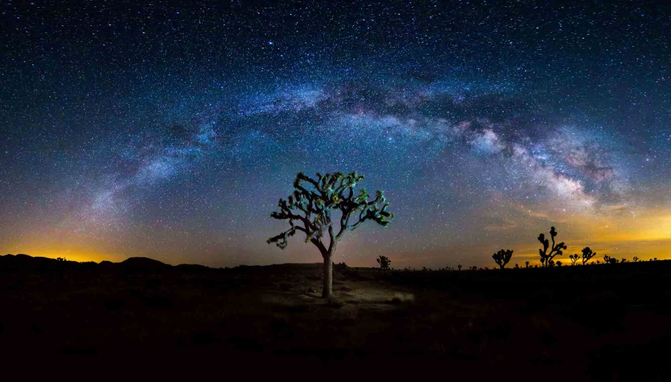 Lone illuminated tree with Milky Way arching over it at Joshua Tree National Park