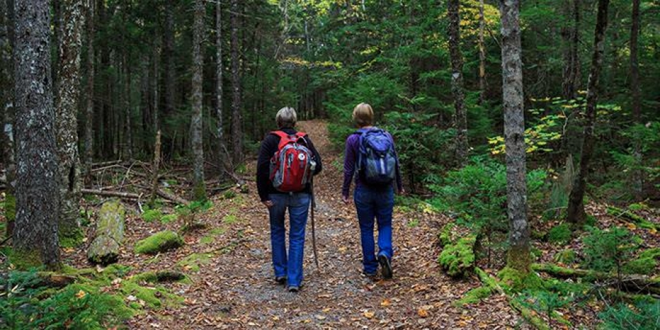 Two people hiking on a trail through the woods at Acadia National Park