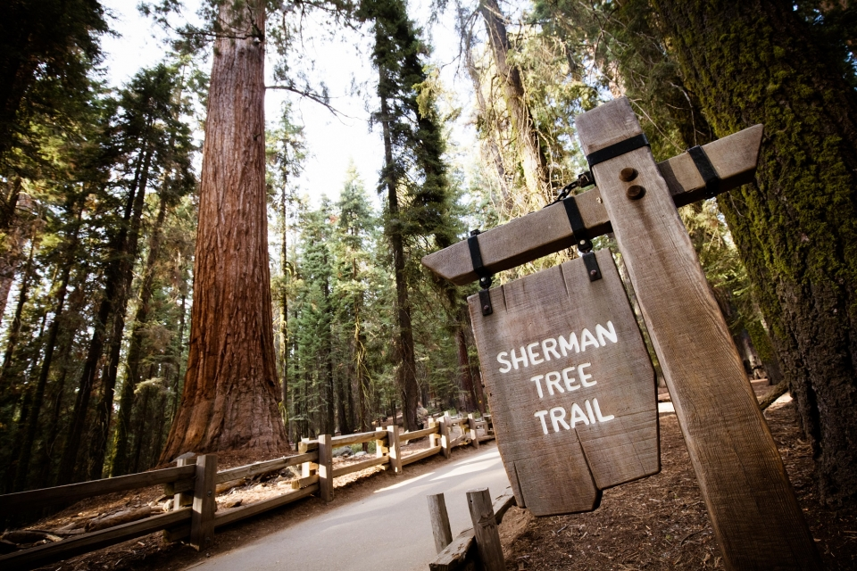 Sherman Tree Trail at Sequoia NP