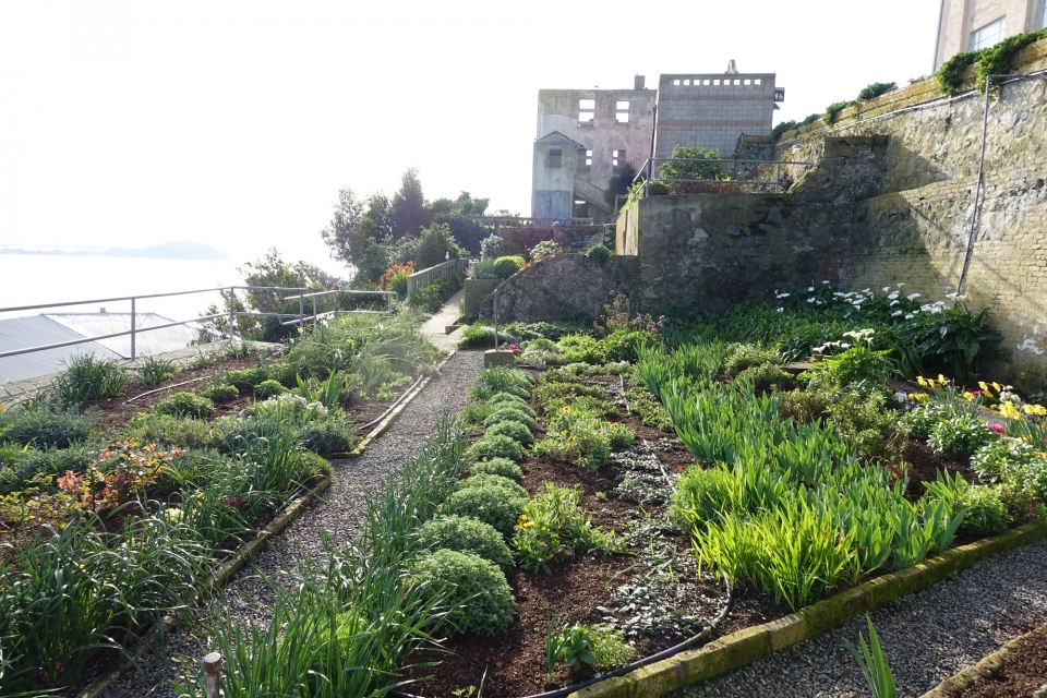 A lush garden with rows of green comprises brightly colored annuals and perennials alongside a gravel walkway on Alcatraz Island
