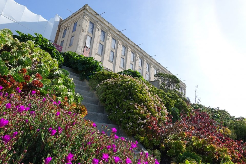 Steep steps carve a path through a blooming garden, filled with Roses, agave, mirror plant, fuchsia, and calla lilies. In the background, the Alcatraz cellhouse looms in the sunlight