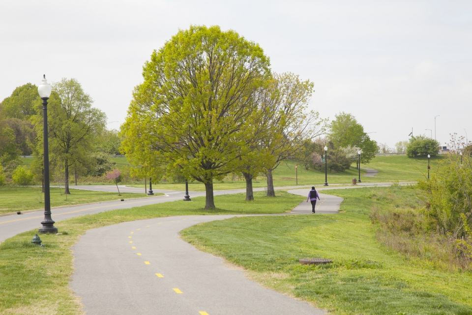 Trees line a paved walkway at Anacostia Park