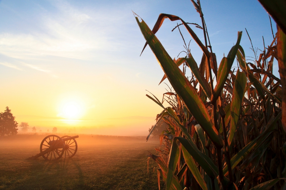 A cannon in a foggy field with cornstalks at sunset, Antietam National Battlefield
