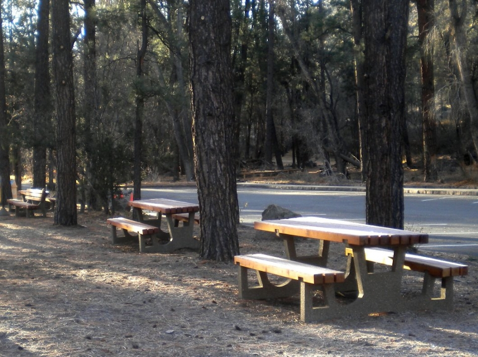Empty picnic tables amongst trees next to a parking lot at sunrise at Bandelier National Monument