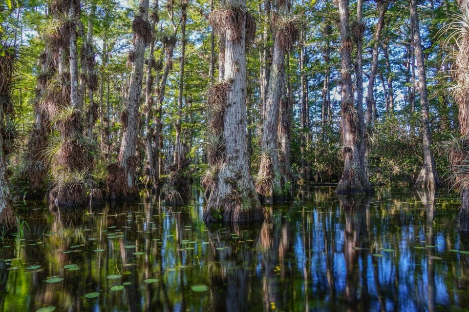Big Cypress National Preserve, Gator Hook view