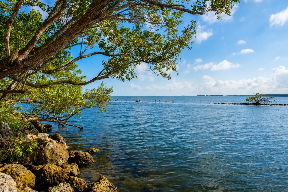 A view of the blue water from the coast at Biscayne National Park