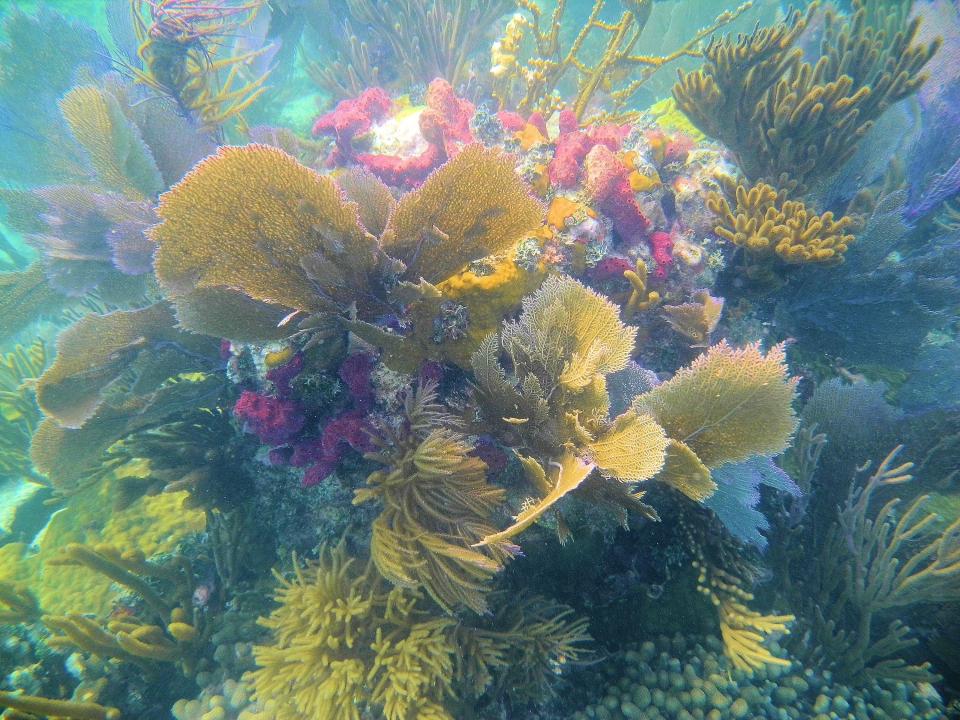 Colorful yellow and red underwater coral at Biscayne National Park