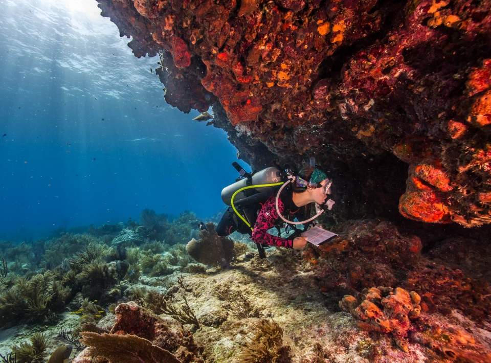 Scuba diver exploring the underwater reef in Biscayne National Park