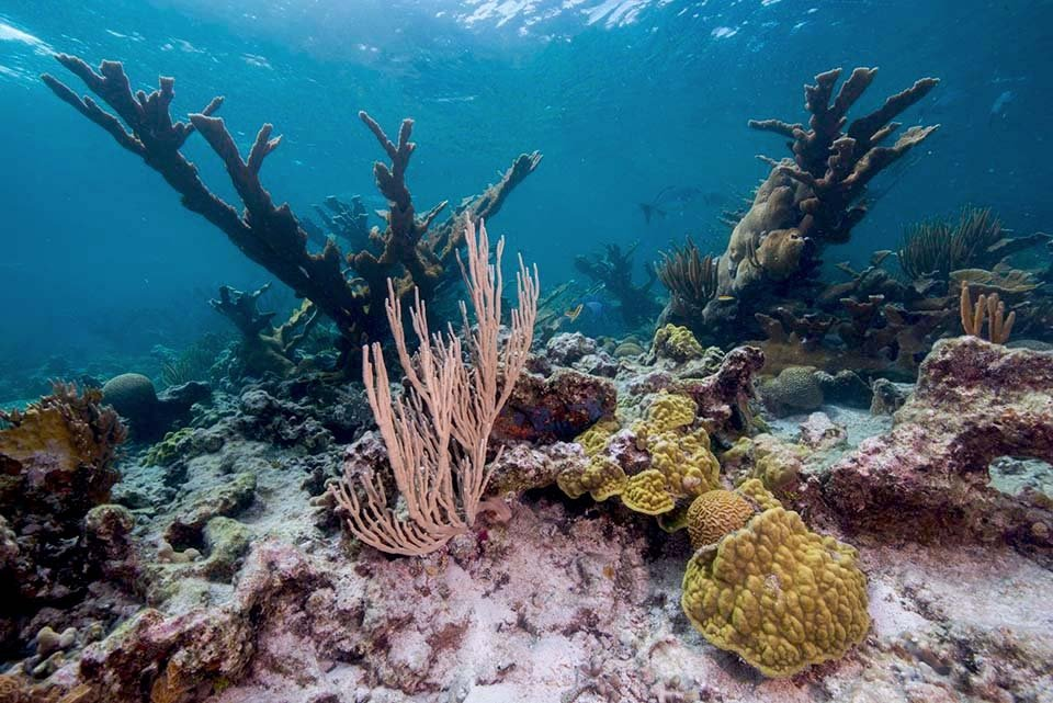 Coral and fish under water at Buck Island Reef National Monument