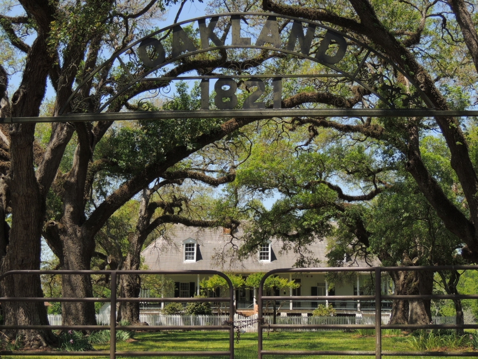 Gates of the Oakland Plantation enclose towering trees that surround the house in Cane River Creole National Historical Park