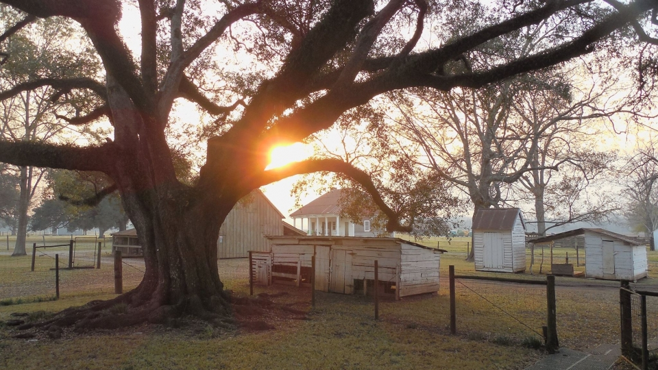 Sun low in the horizon peeping through branches of a large tree at the Oakland Plantation at Cane River Creole National Historical Park and Heritage Area