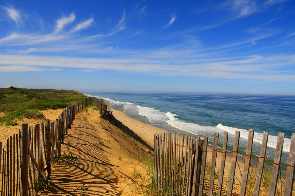 The yellow sandy beach with a wooden fence and some green grass next to the blue ocean under a blue sky at Cape Cod National Seashore