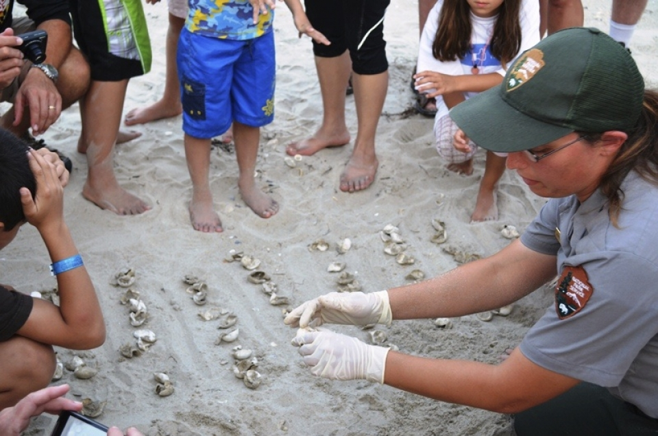 Sea turtle nest excavation on Ocracoke Island at Cape Hatteras National Seashore