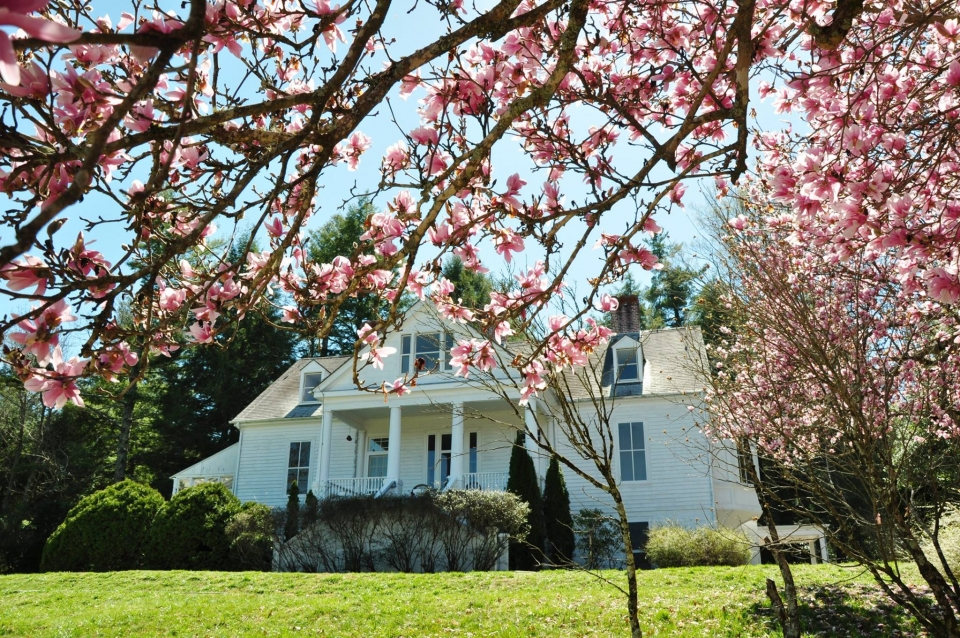 White building of Carl Sandburg Home National Historic Site surrounded by pink magnolia blossoms