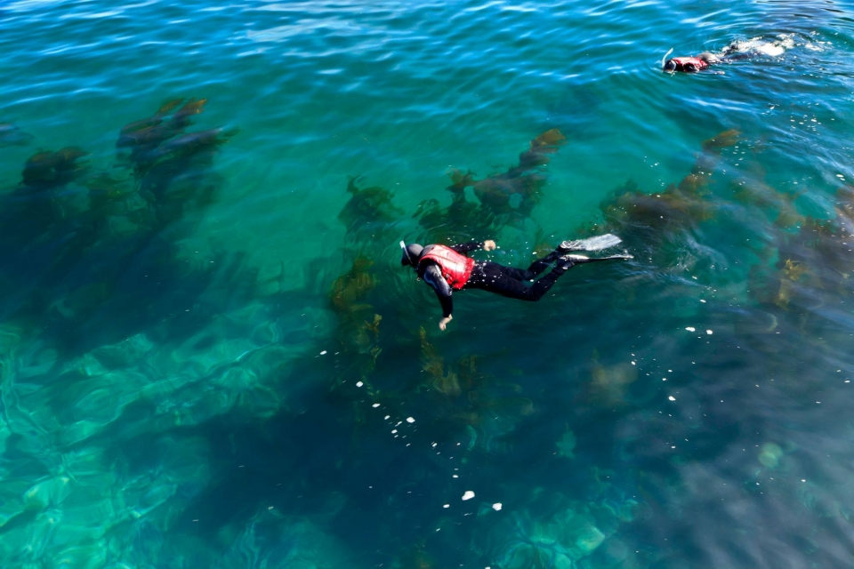 Two snorkelers in the green-blue ocean at Channel Islands National Park