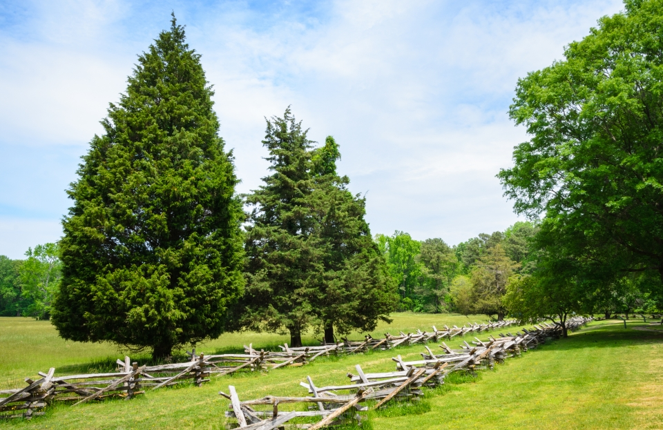 A wide, green field is cut through by two wooden fences and tall, bright green trees.