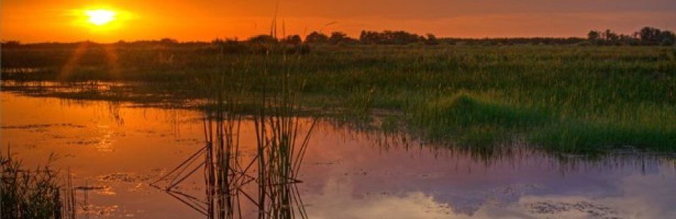 Tall grasses and lake front at sunset