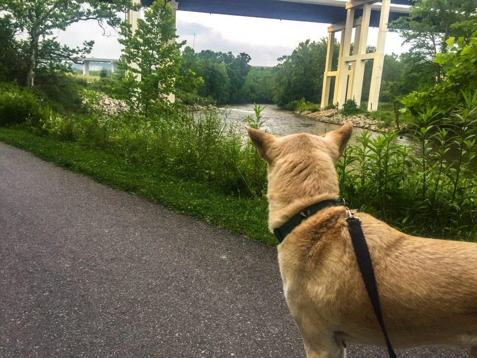 Dog on a paved trail near a river running under a tall bridge