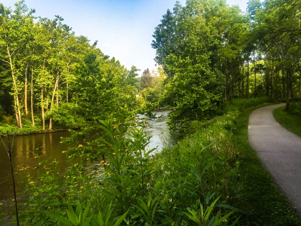 Paved trail along a river and trees