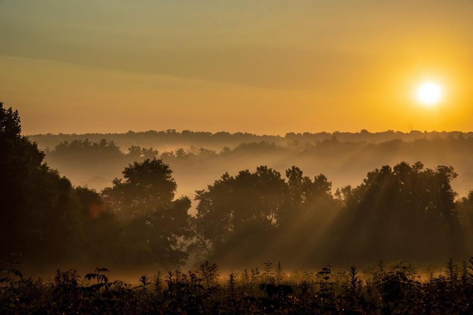 The orange sun low in the horizon with sun beams cutting through the fog and trees at Cuyahoga Valley National Park
