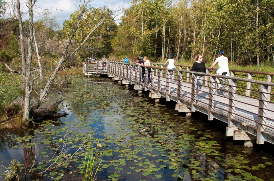 Some people walking and biking on a wooden boardwalk over a marsh covered in lily pads and surrounded by trees at Cuyahoga Valley National Park