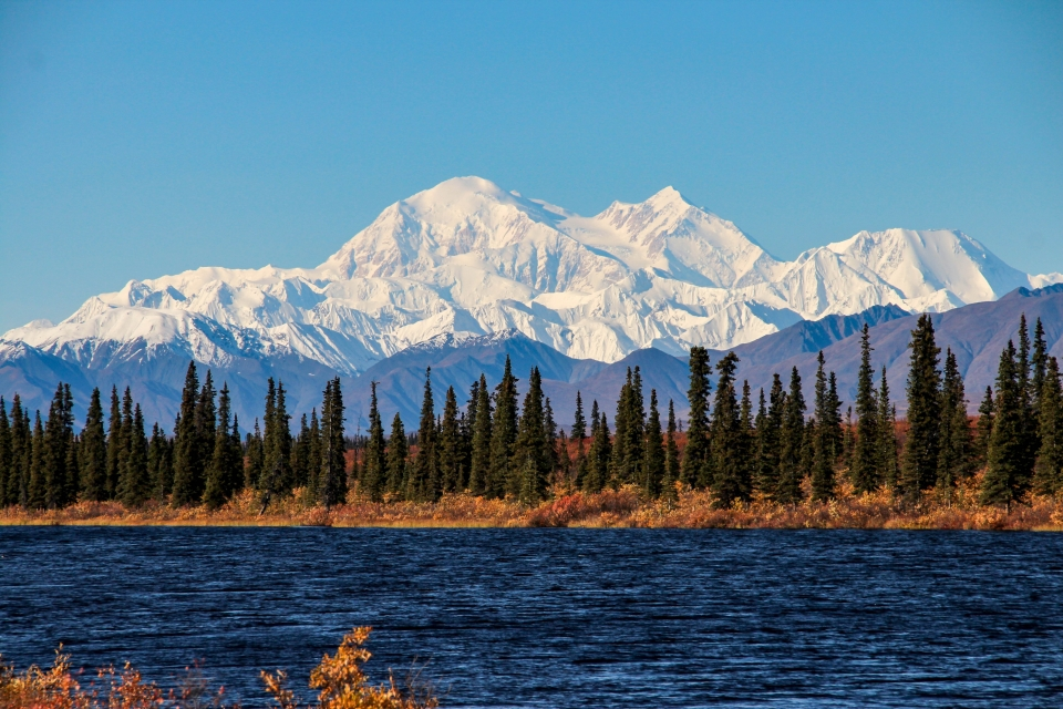 A line of pine trees line the bank of a body of water, in the background snow-capped mountains basked in sunlight