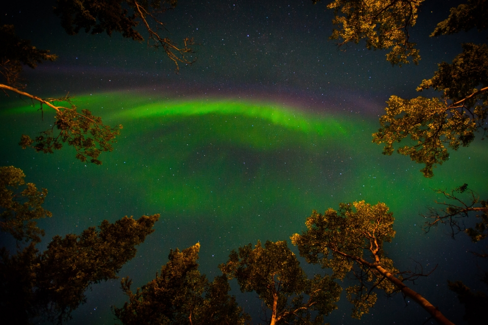 Green and red aurora borealis in the night sky above the trees at Denali National Park & Preserve, a park in Alaska